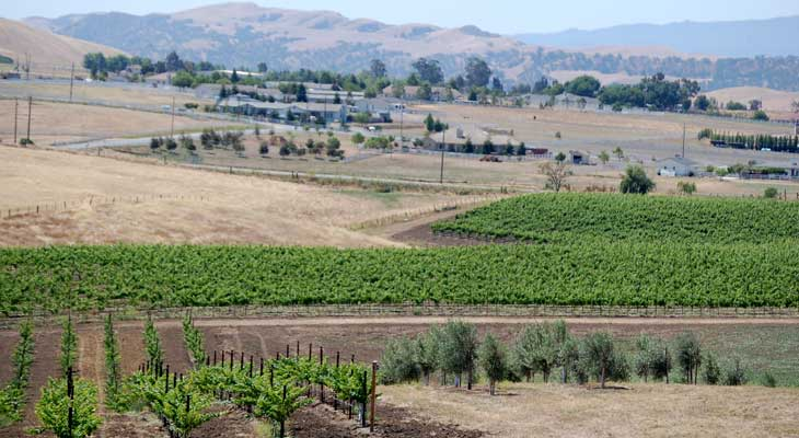 Guerra Vineyards & Groves